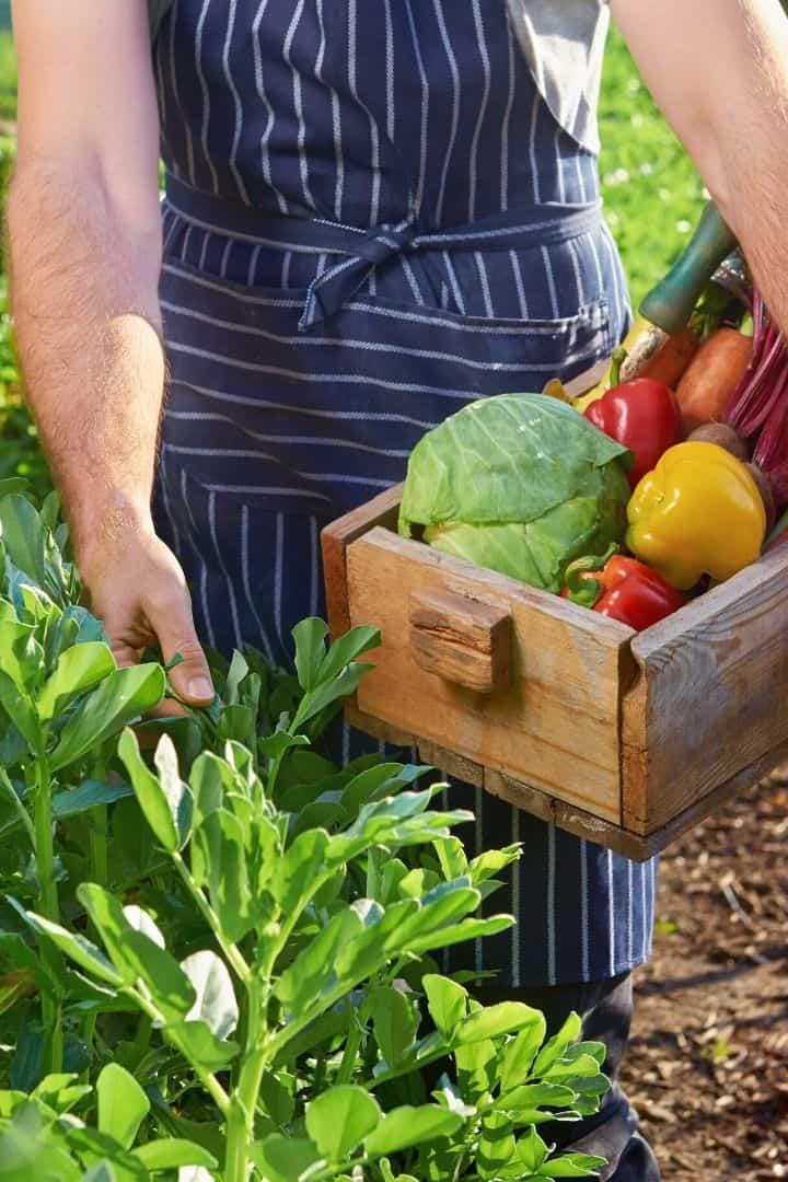Farmers market, healthy eating | Jiu Jitsu Legacy